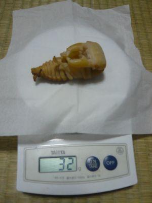 スマトラヒラタ♂蛹32g
