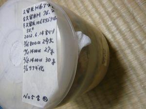久留米M♂蛹 幼虫時30g