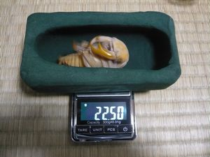 久留米M♂ 22.5g蛹