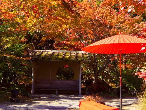紅葉2014松島円通院5石庭地の庭
