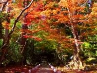 紅葉2014松島円通院6参道