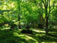 紅葉2014松島円通院9座林瞑想の庭