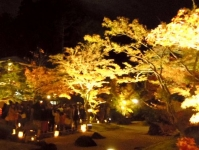 紅葉2014松島円通院19石庭