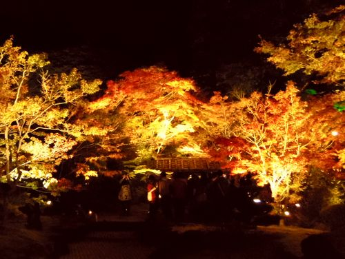 紅葉2014松島円通院20石庭