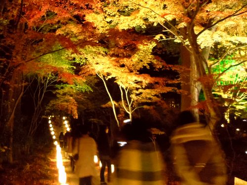 紅葉2014松島円通院23参道
