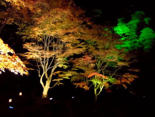 紅葉2014松島円通院26遠州の庭