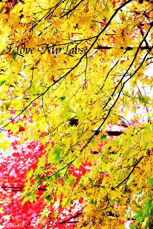 2013IMG_4025 (2)雨の紅葉