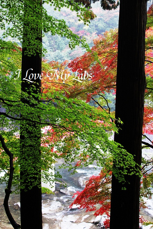 2013IMG_4011 雨の紅葉