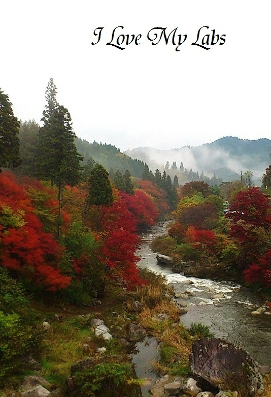 2013DSC_7679 (2)雨の紅葉