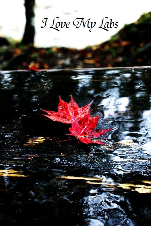 2013IMG_4017 (2)雨の紅葉