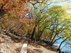 高山登山口周辺の紅葉