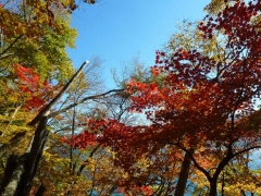 赤岩周辺の紅葉