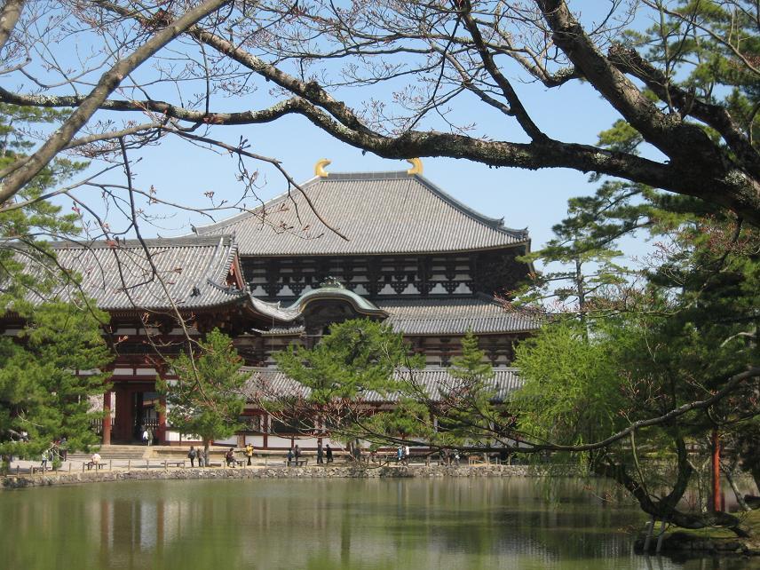東大寺と郡山城の桜 006