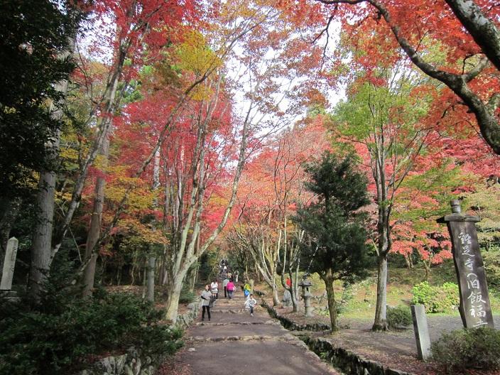 鶏足寺の参道の紅葉