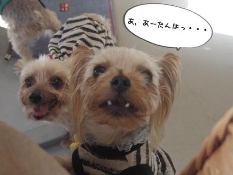 e-dog10.jpg