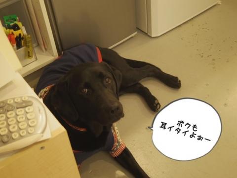 e-dog13.jpg