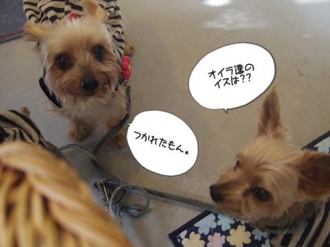 e-dog2.jpg