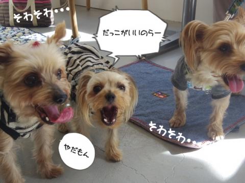 e-dog5.jpg