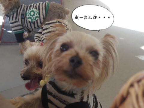 e-dog9.jpg