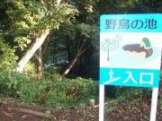 野鳥の池_1