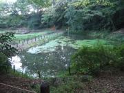 野鳥の池_2