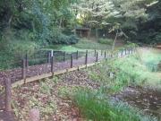 野鳥の池_3