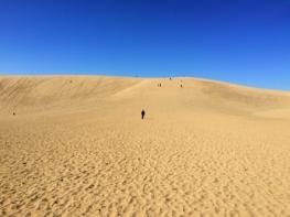 出張の折鳥取砂丘に行ってみました。