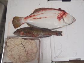 1鮮魚セット20131130