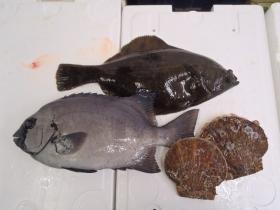 2鮮魚セット20141031