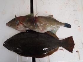 15鮮魚セット2014115