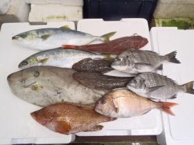 1鮮魚セット2014116