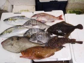 2鮮魚セット2014116