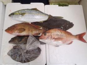 9鮮魚セット2014116