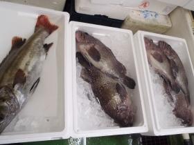 10鮮魚セット2014116