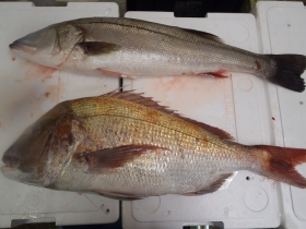2鮮魚セット2014118