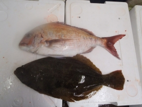 13鮮魚セット2014118