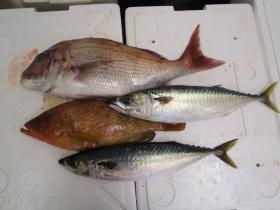 15鮮魚セット2014118