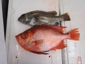 7鮮魚セット20141121