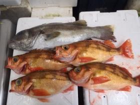 8鮮魚セット20141125