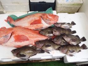 12鮮魚セット20141125