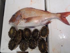 16鮮魚セット20141125