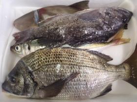 18鮮魚セット20141125