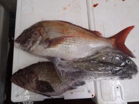 17鮮魚セット20141125