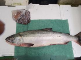 1鮮魚セット20141126