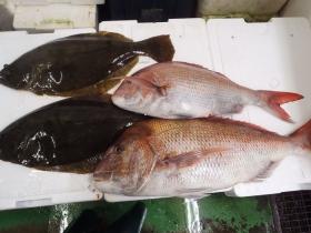4鮮魚セット20141126