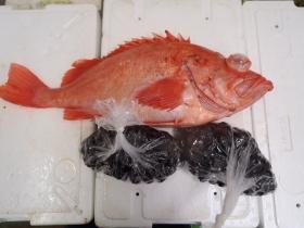 12鮮魚セット20141126