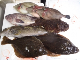 2鮮魚セット20141127