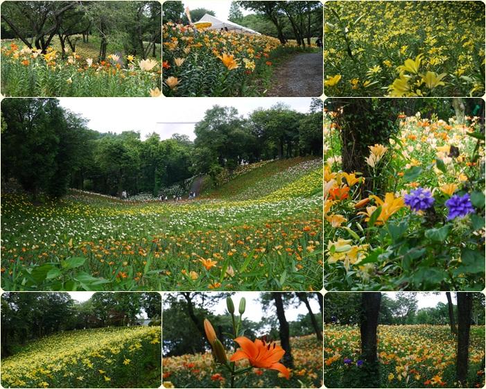 0622ゆり園①