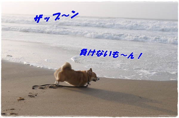 2013_0407_061141-P1040677.jpg