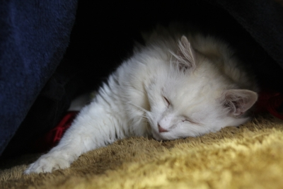 kotatsu paradise1 resized